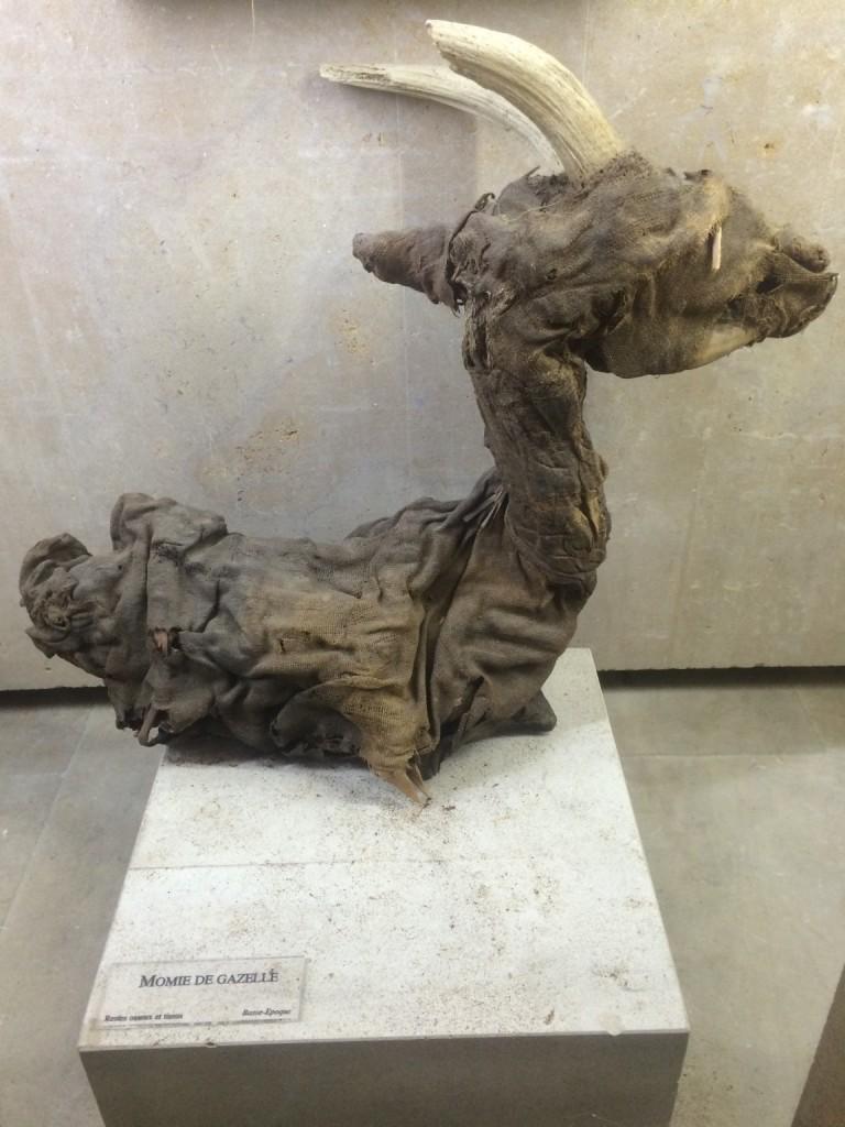 mumified goat