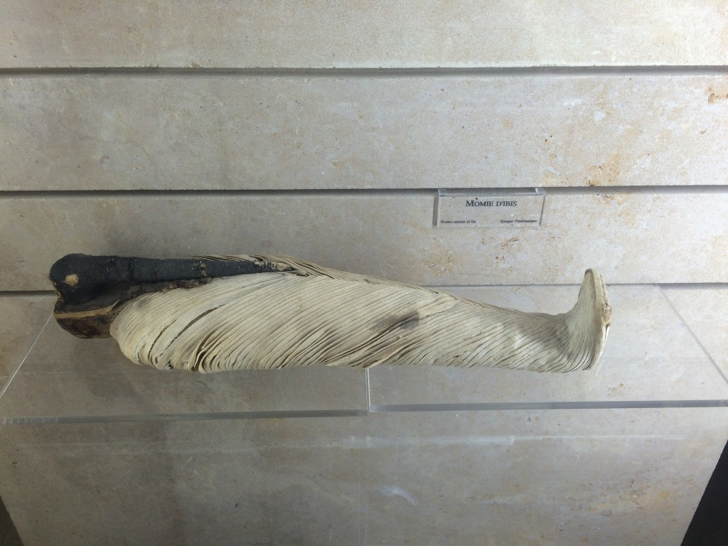 mumified ibis