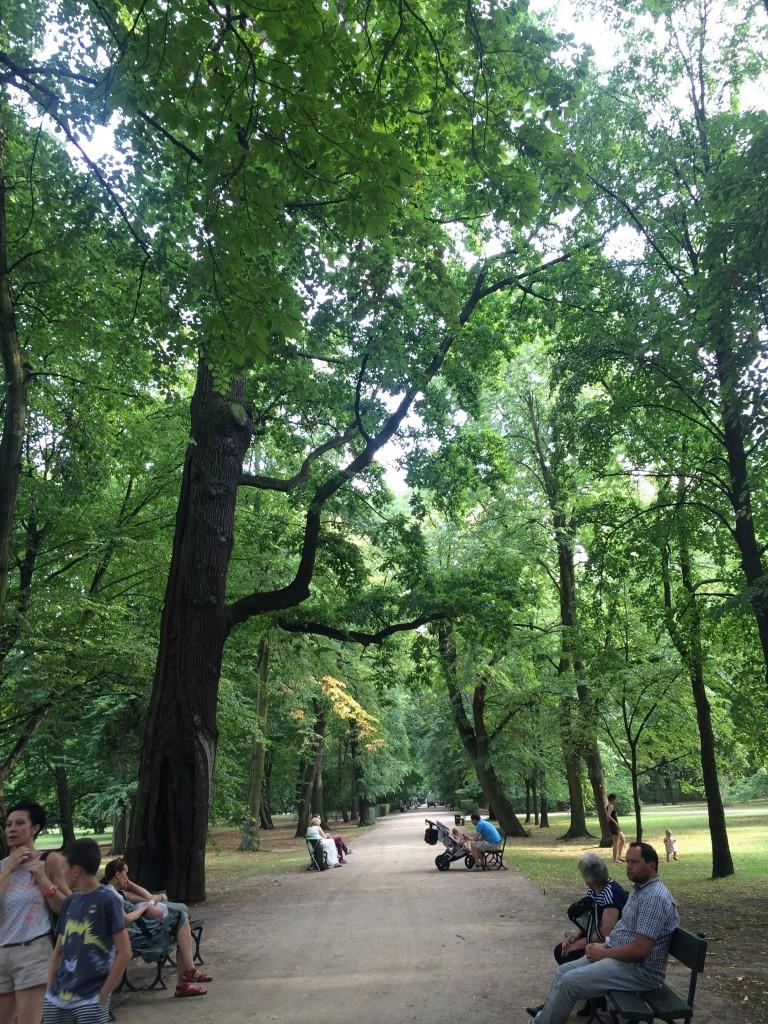 Park foliage