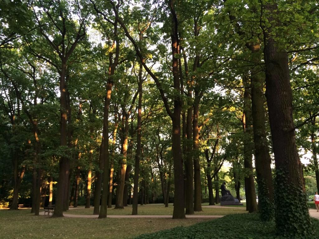 Park foliage 2